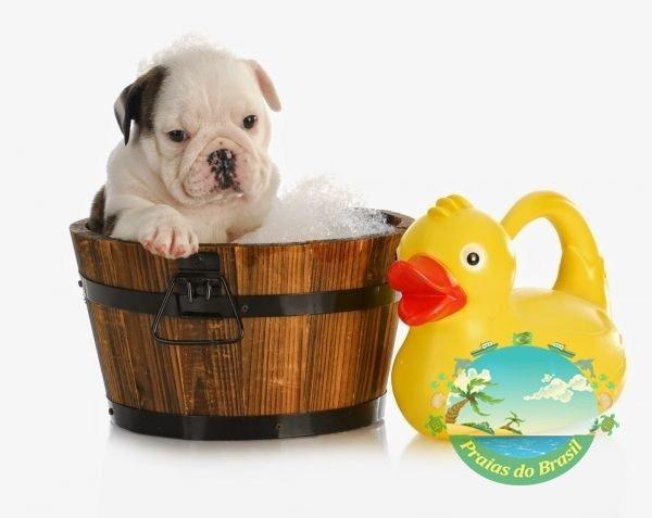 Shampoo Orgânico para cães