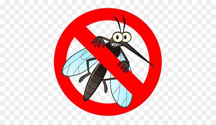 Saiba a forma mais eficaz de se livrar do mosquito da dengue e outros insetos